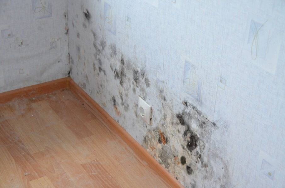 Как убрать сырость на стенах: причины и устранение проблемы