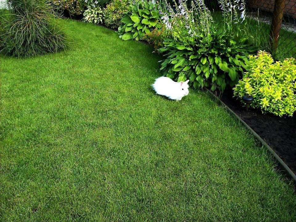 Как правильно сеять газон своими руками: пошаговая инструкция | +видео