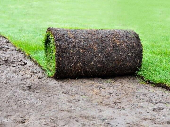 Укладка газона своими руками не так уж и сложна. ее успех во многом зависит соблюдения технологии.