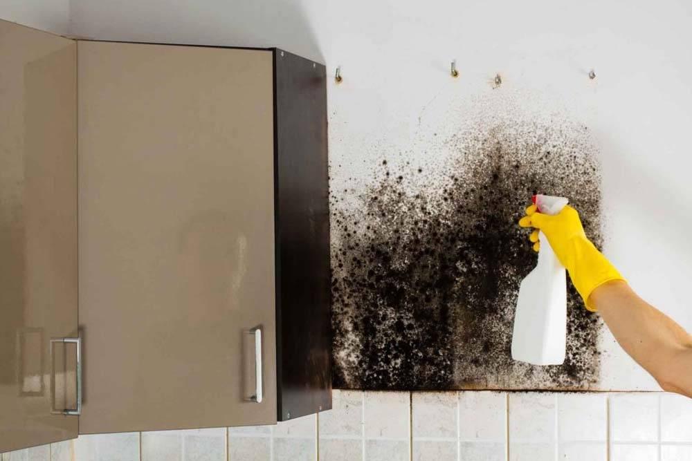 Черная плесень: как полность избавиться в квартире и частном доме