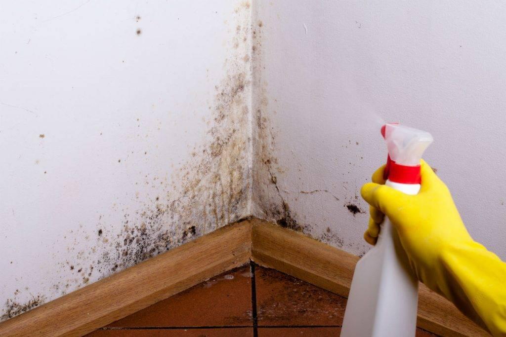 Черная плесень на стенах в квартире: как избавиться, средства, как бороться с плесневым грибком в ванной и на обоях