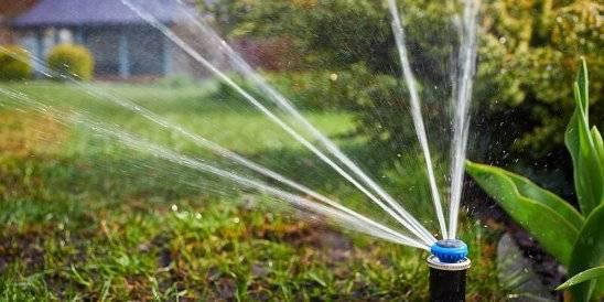 Можно ли поливать водой из бассейна огород, газон, цветы   5domov.ru - статьи о строительстве, ремонте, отделке домов и квартир