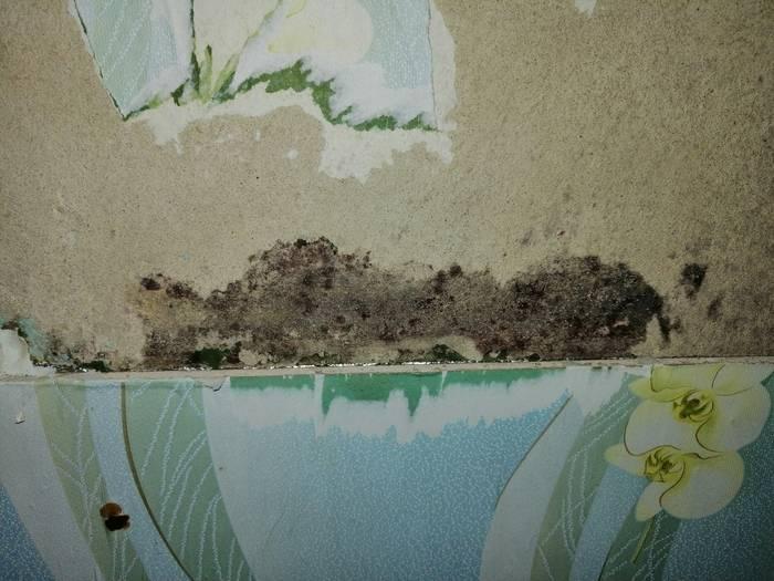 Черная плесень на стенах, как избавиться самостоятельно: мой опыт