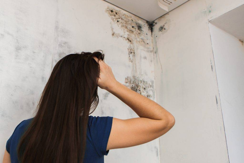 От чего появляется плесень в углах комнаты?