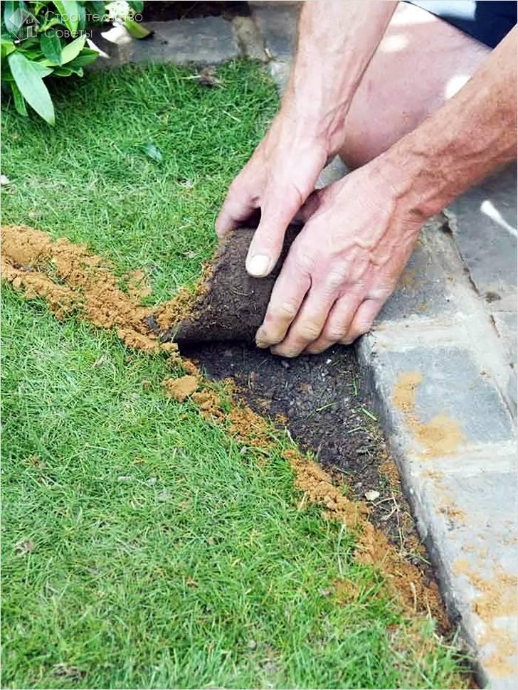 Устройство и посев газона (с фото)