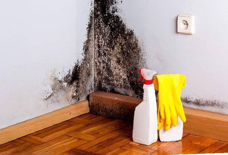 Плесень в ванной, как избавиться в домашних условиях