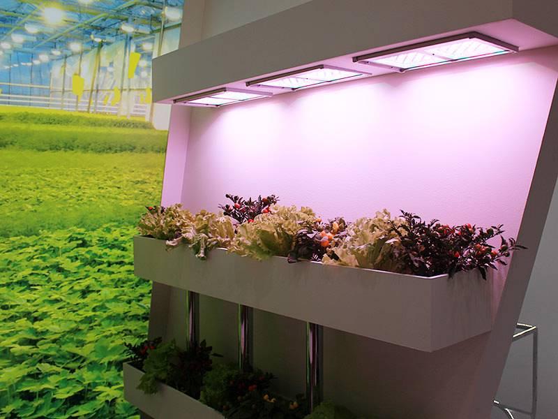 Организация правильного освещения в теплице: схемы размещения светильников и практические советы как установить оптимальное освещение для теплиц (95 фото)