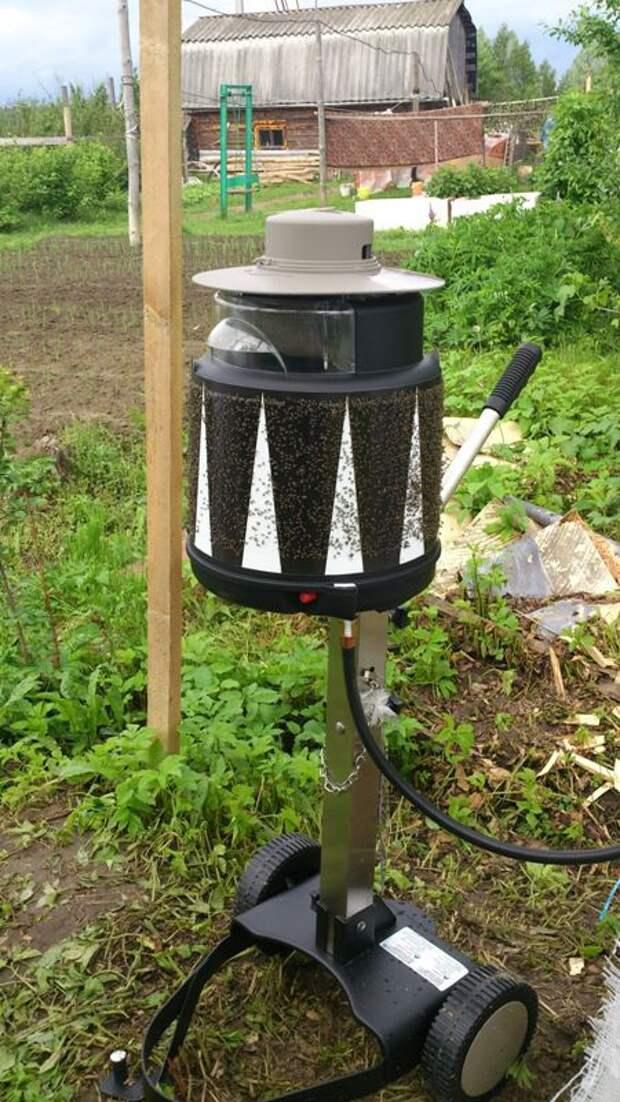 Как избавиться от комаров на дачном участке: выбираем самый эффективный метод