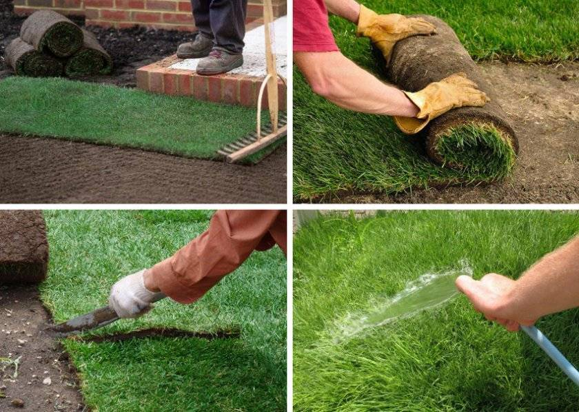 Как сделать газон своими руками: особенности укладки