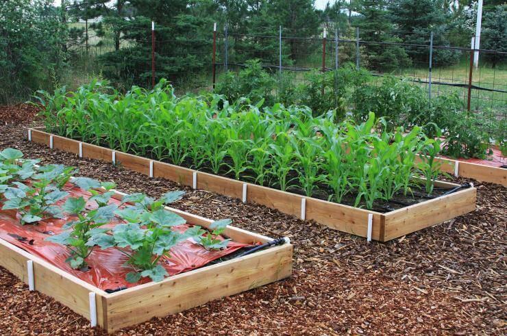 Умный огород или грядки для ленивых дачников - огород, сад, балкон - медиаплатформа миртесен