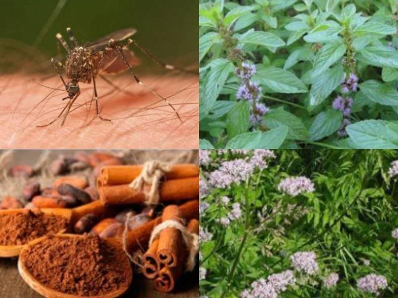 Как избавиться от комаров на дачном участке: лучшие способы!