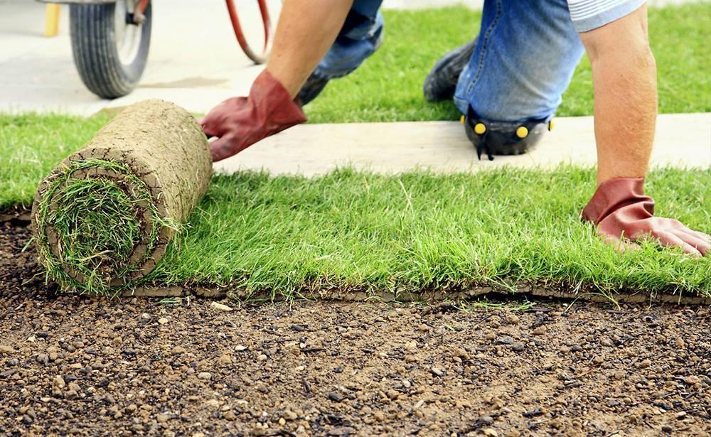 Как правильно посеять газонную траву: руководство по начальному этапу создания газона на даче.