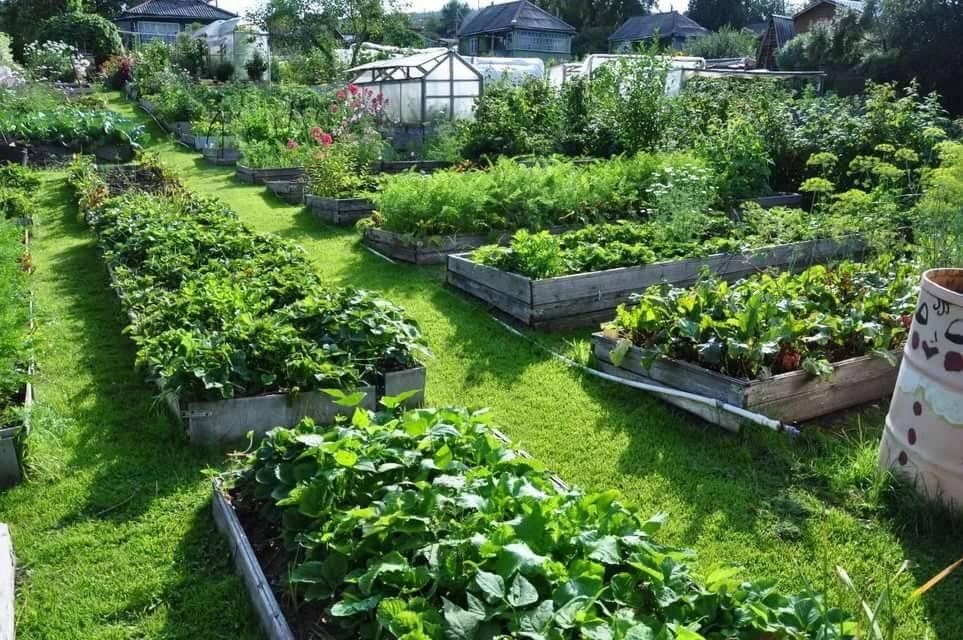 Сад и огород для ленивых - отличный урожай без регулярного ухода