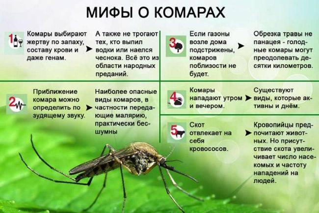 Как избавиться от комаров на даче