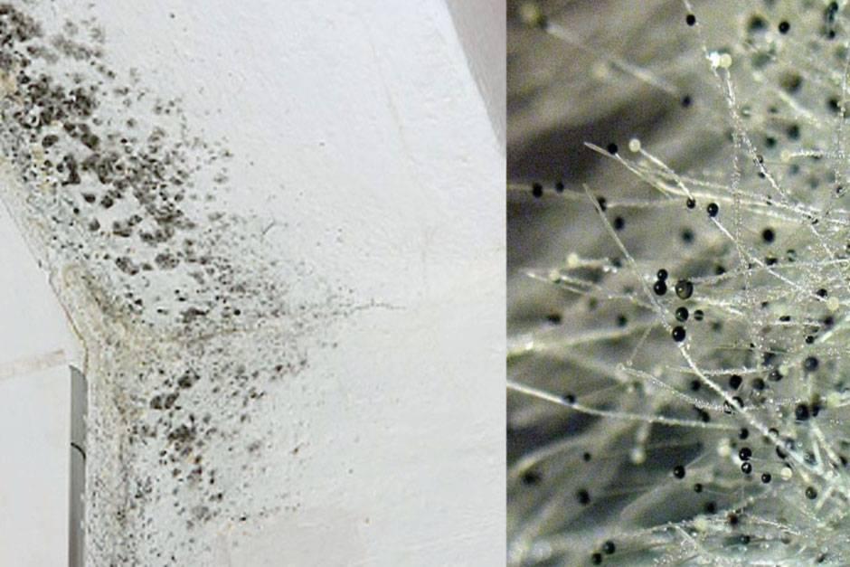 Как избавиться от плесени в домашних условиях- эффективные способы