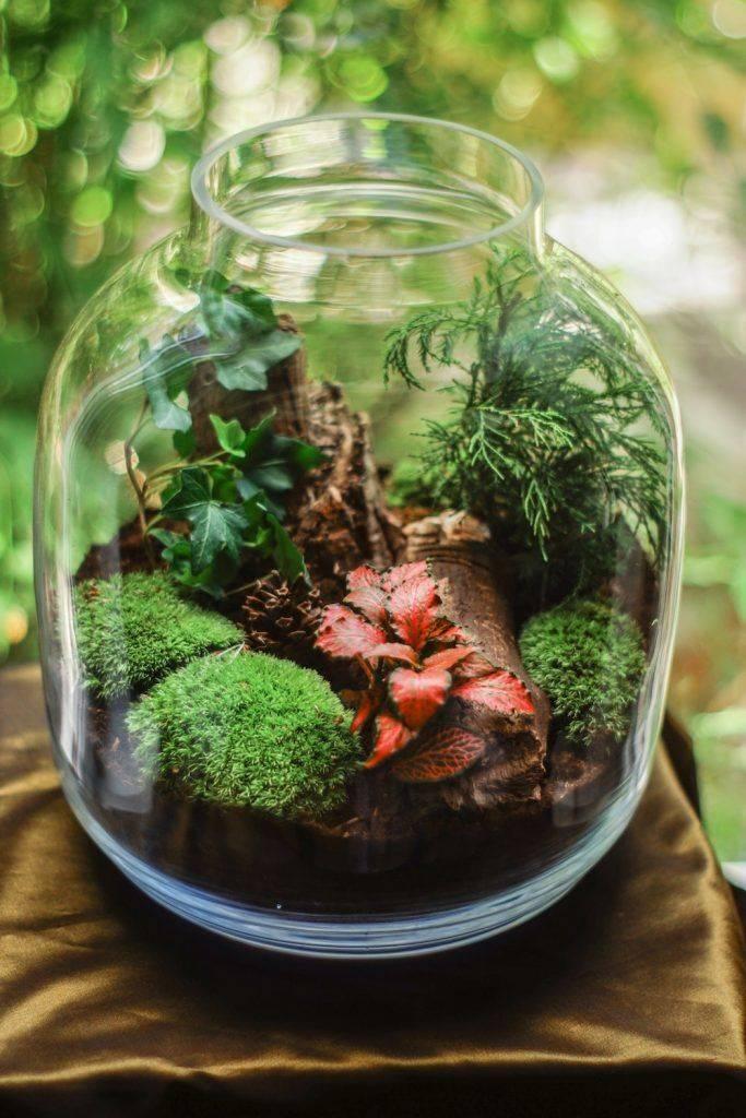 Флорариум с суккулентами (32 фото): как посадить цветы в аквариум из стекла? как сделать садик из суккулентов в стеклянной вазе своими руками?