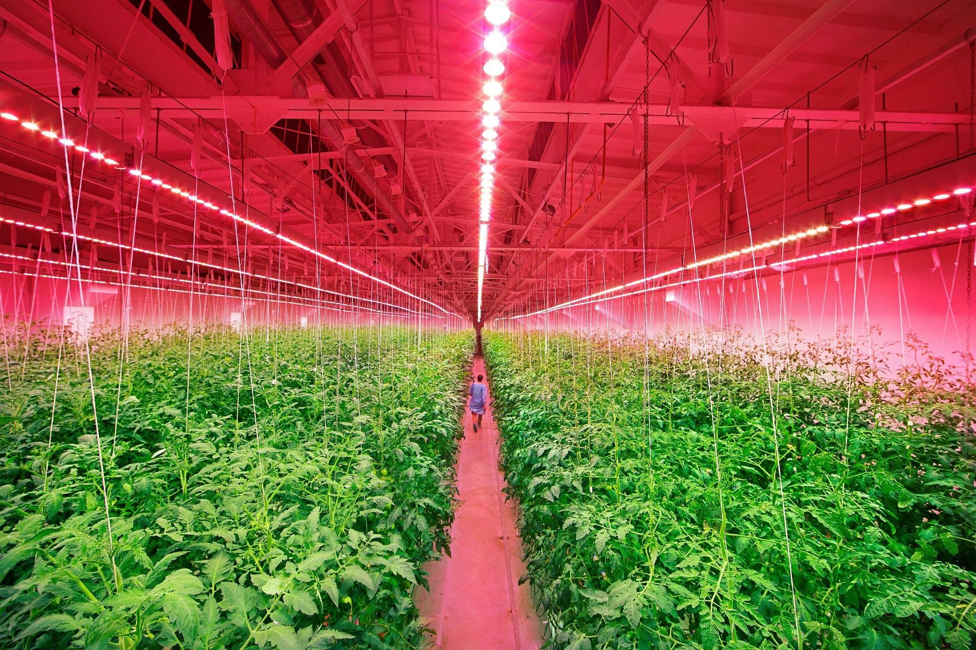 Выбираем правильное освещение для выращивания огурцов, помидоров и салата в теплице