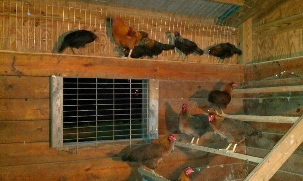 Вентиляция в сарае для животных своими руками