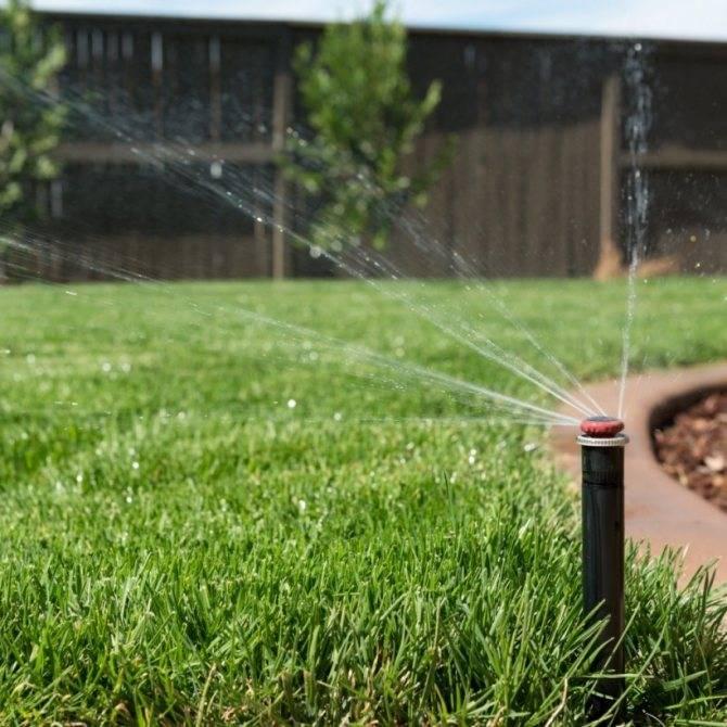 Можно ли поливать холодной водой из скважины растения, деревья и газон
