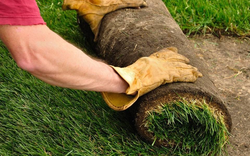 Как сделать хороший опрятный газон на даче своими руками: правила посадки