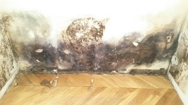 Как самостоятельно и с помощью профессионалов убрать черную плесень со стен?