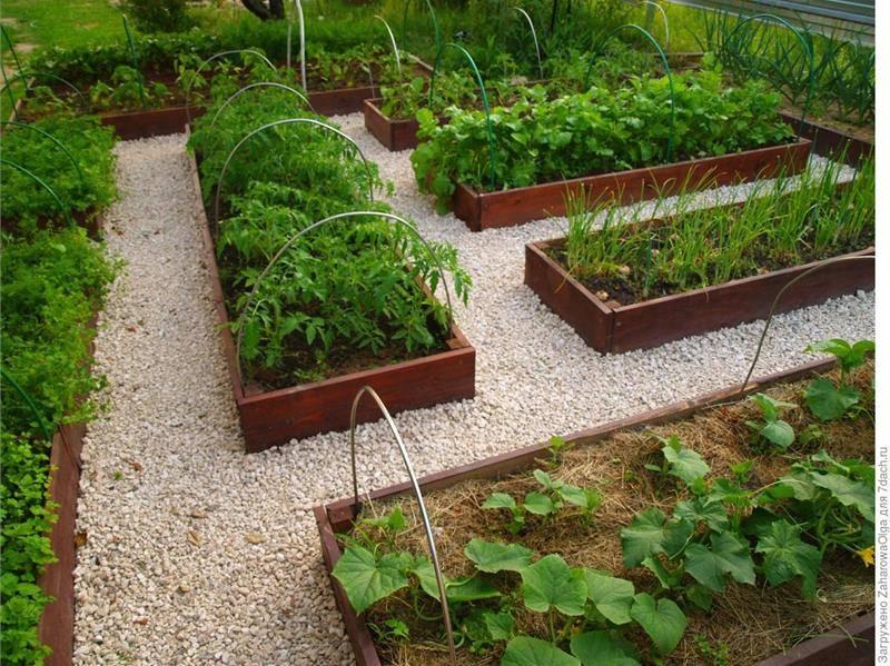 Огород для «ленивых»: принципы и правила организации умных грядок + выбор растений и уход за ними, отзывы дачников