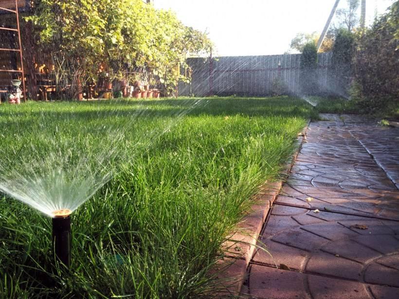 Как поливать огород: выбор оптимального метода, времени и периода