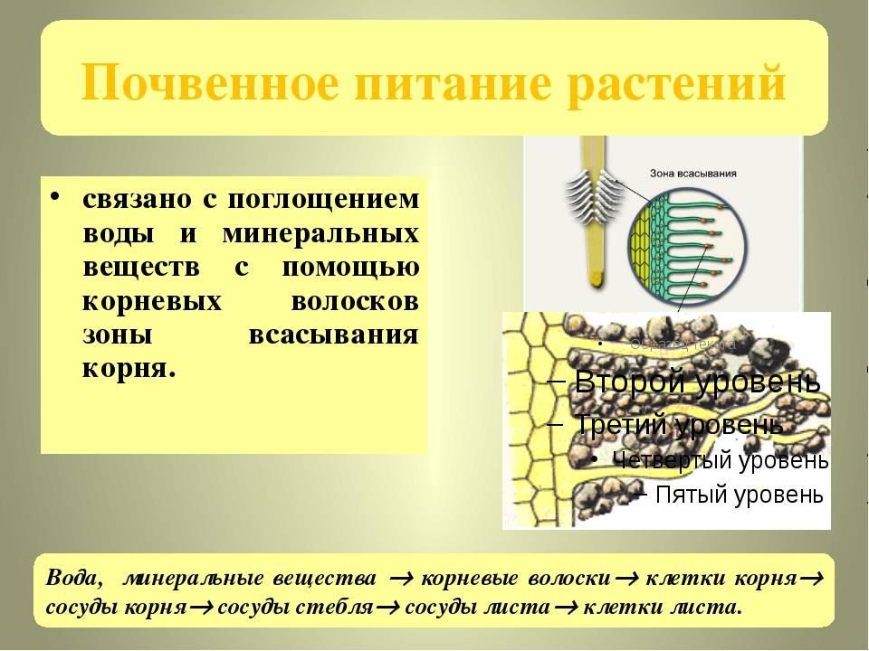Аэротенки для очистки сточных вод: что это за биологическая система, принцип ее работы, а также классификация и на что обращать внимание при покупке