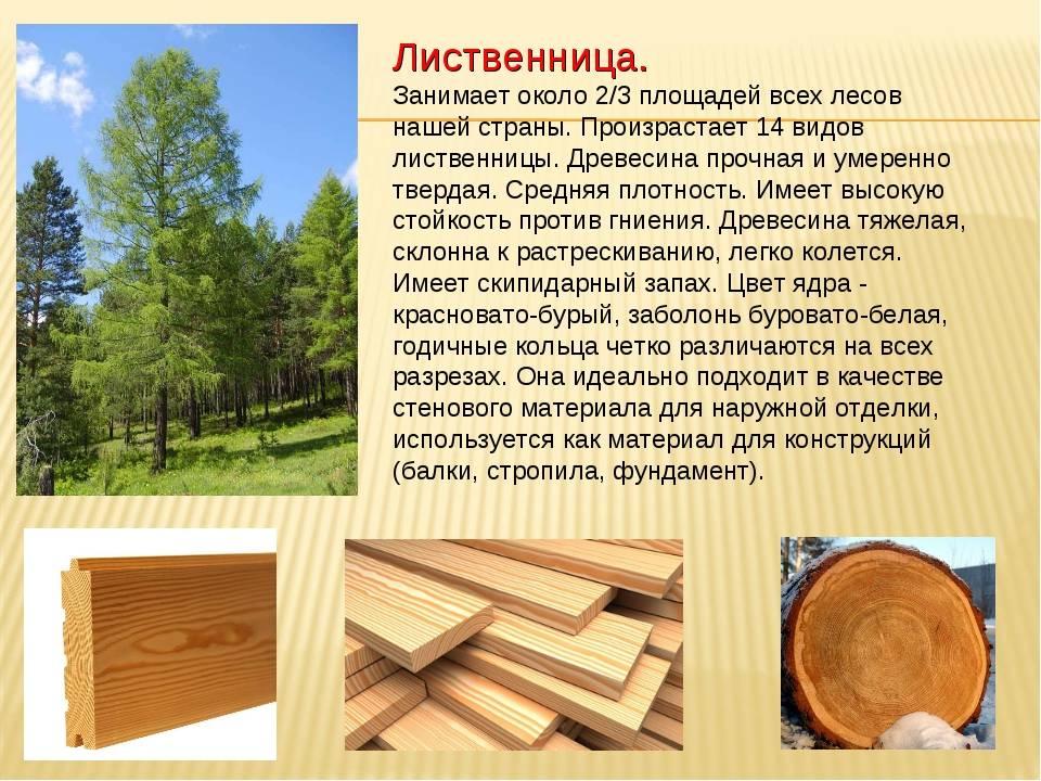 Какой деревянный дом лучше выбрать, плюсы и минусы.