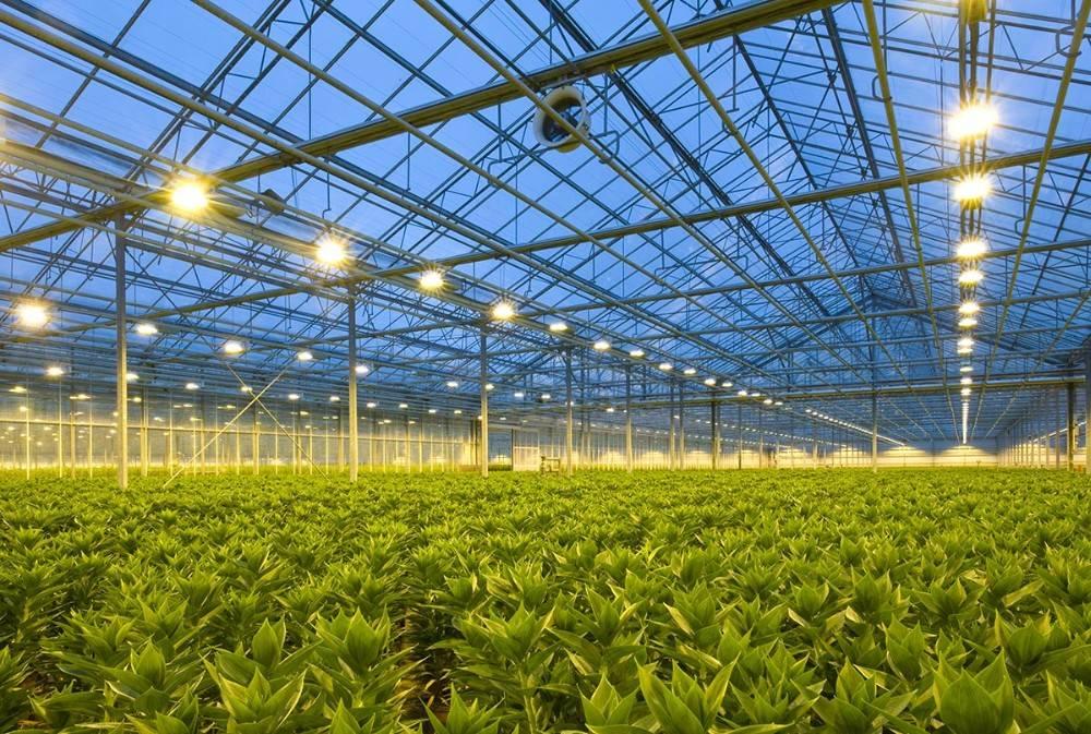 Лампы для теплиц: какие выбрать для тепличного освещения, инфракрасные, натриевые и светодиодные светильники