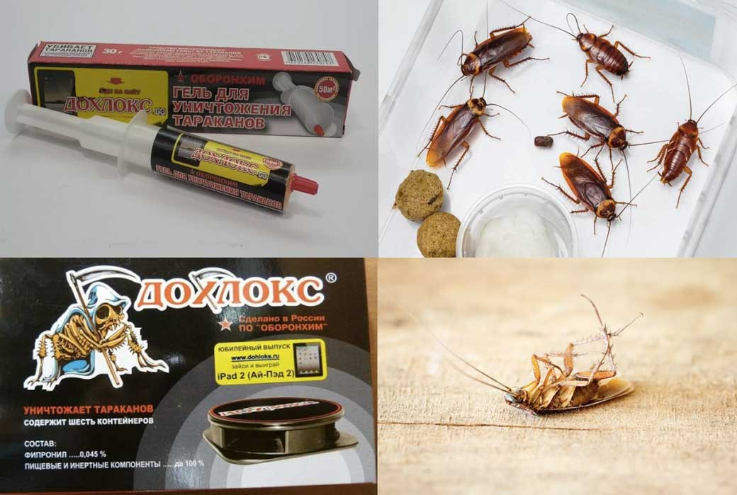 Топ-12 самых эффективных средств от тараканов в квартире: отравы,порошки, гели