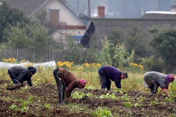 8 недостатков жизни за городом, о которых нужно знать до переезда | brodude.ru