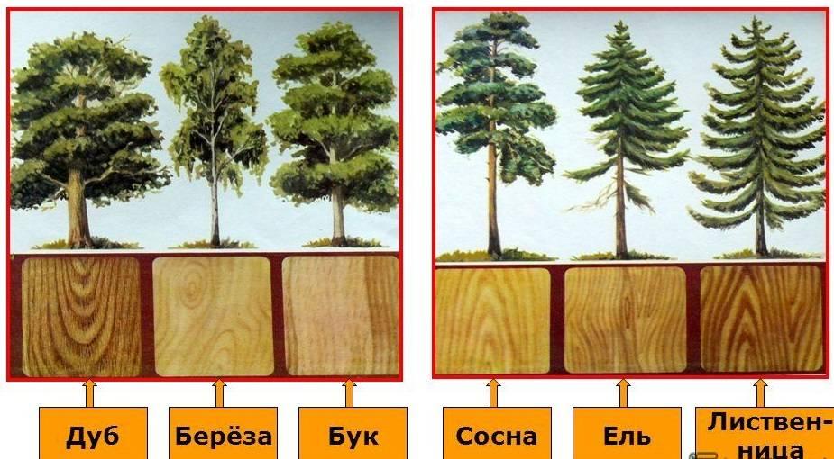 Доска для каркасного дома: выбор древесины для строительства