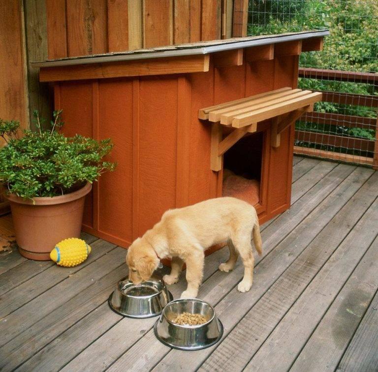 Будка для собаки своими руками: поэтапный мастер-класс по сооружению и оформлению своими руками, выбор конструкции будки