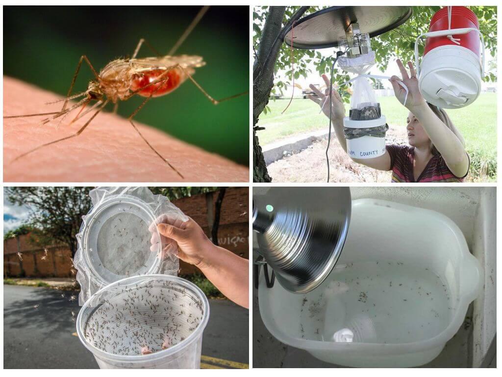 Как избавиться от комаров в квартире и на дачном участке?