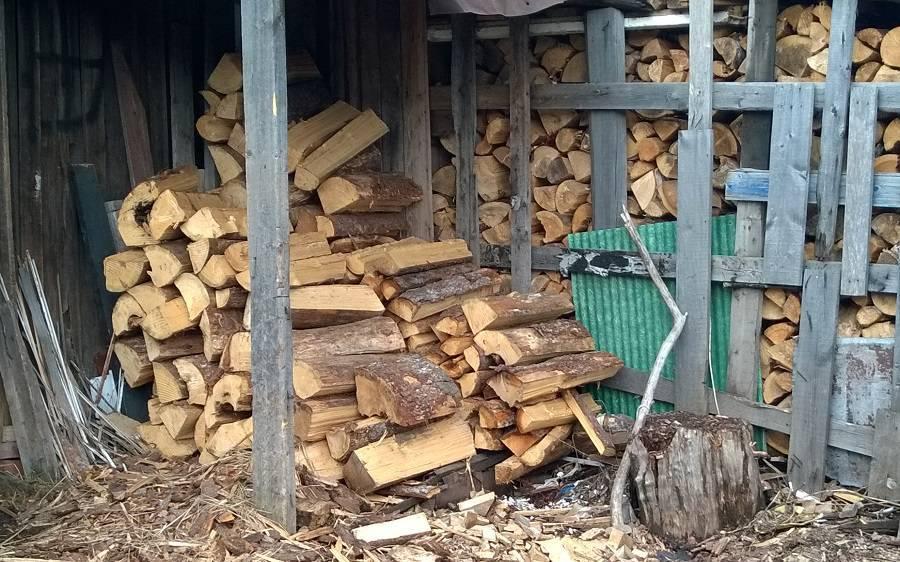 Какими видами дров лучше топить баню?