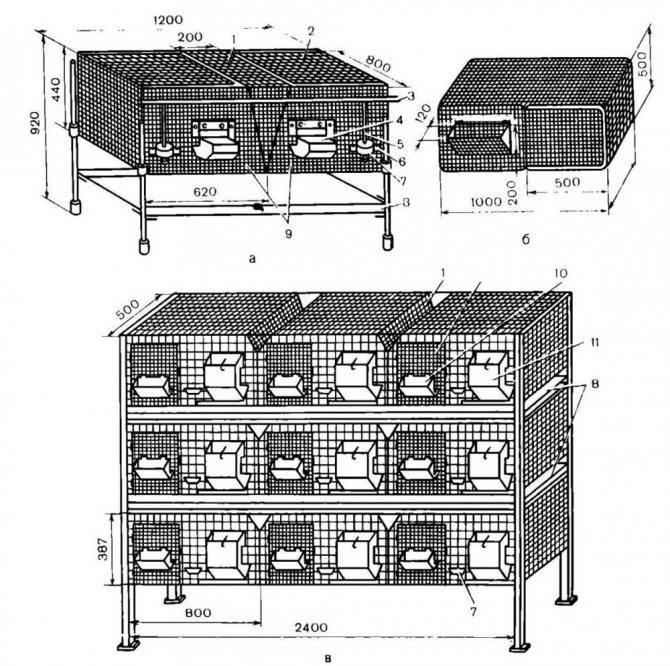 Как собственноручно построить клетку для кроликов по чертежам с размерами