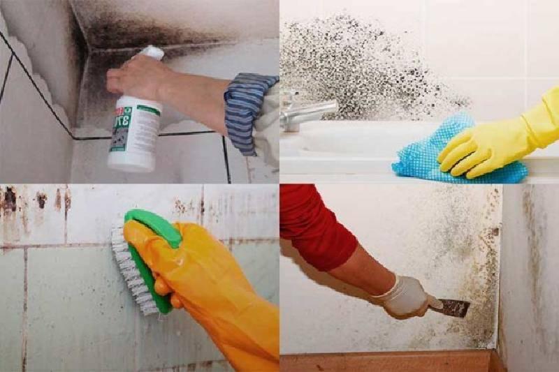 Способы избавления от черной плесени в ванной