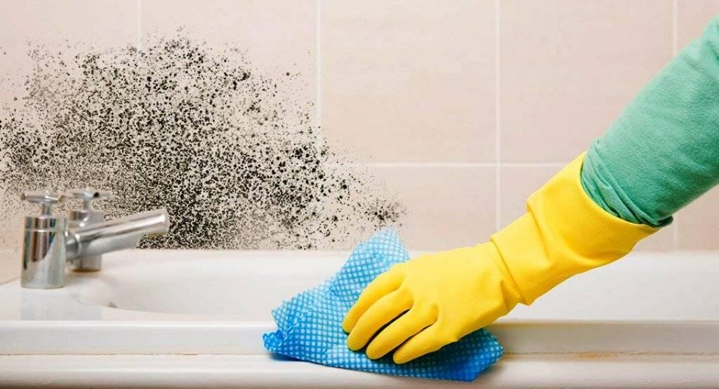 Как избавиться от плесени в ванной комнате различными способами