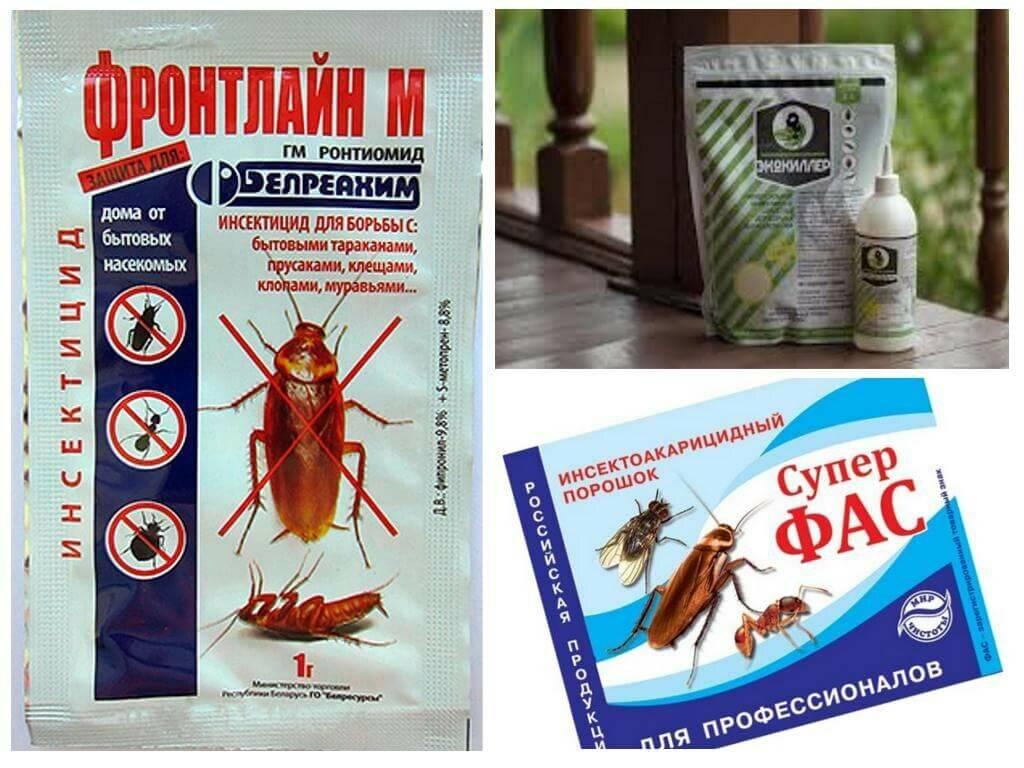 Средства от тараканов в квартире: как выбрать лучшее, современное и безопасное?