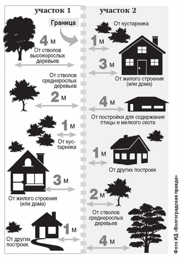 На каком расстоянии сажать деревья от забора