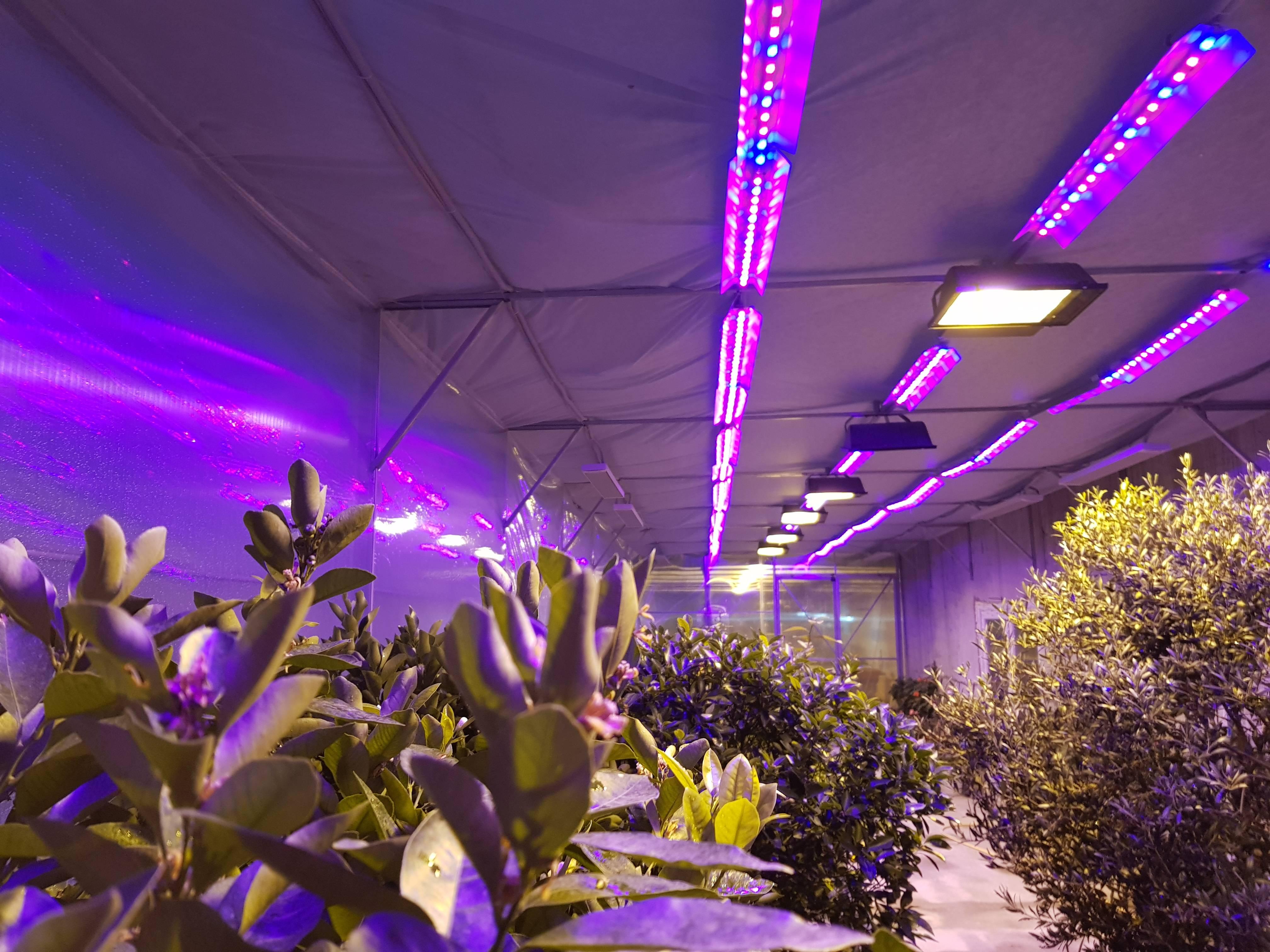 Лампы для теплиц: инфракрасные и светодиодные тепличные светильники, какие выбрать, освещение натриевыми фонарями и электролампами дневного света