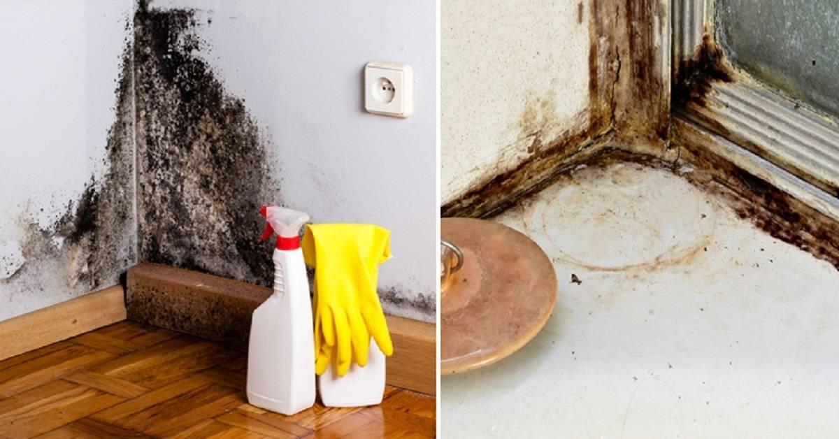 Как бороться с плесенью в углах дома?