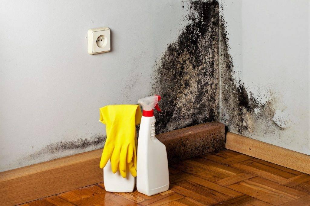 Как убрать плесень в доме (в холодильнике, с книг, деревянных поверхностей и досок, углах комнаты или квартиры, с гипсокартона, посуды) народными и химсредствами?
