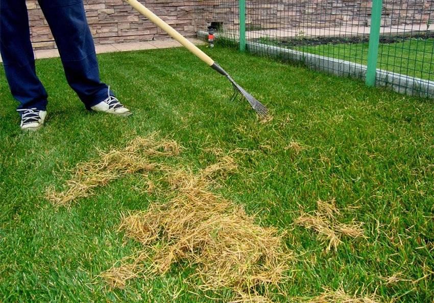 Как правильно сеять газон своими руками: пошаговая инструкция   +видео