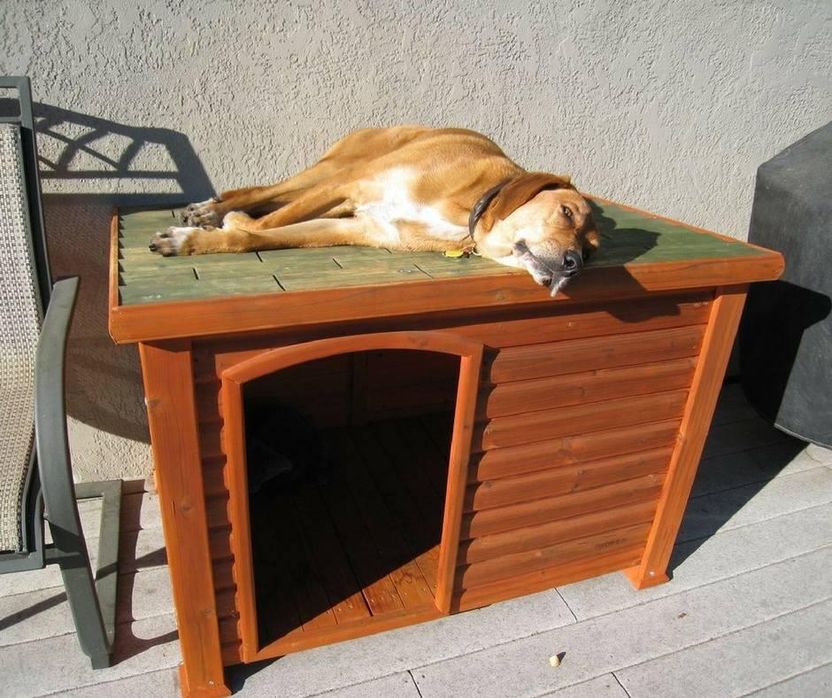 Будка для собаки: варианты будок, схема изготовления