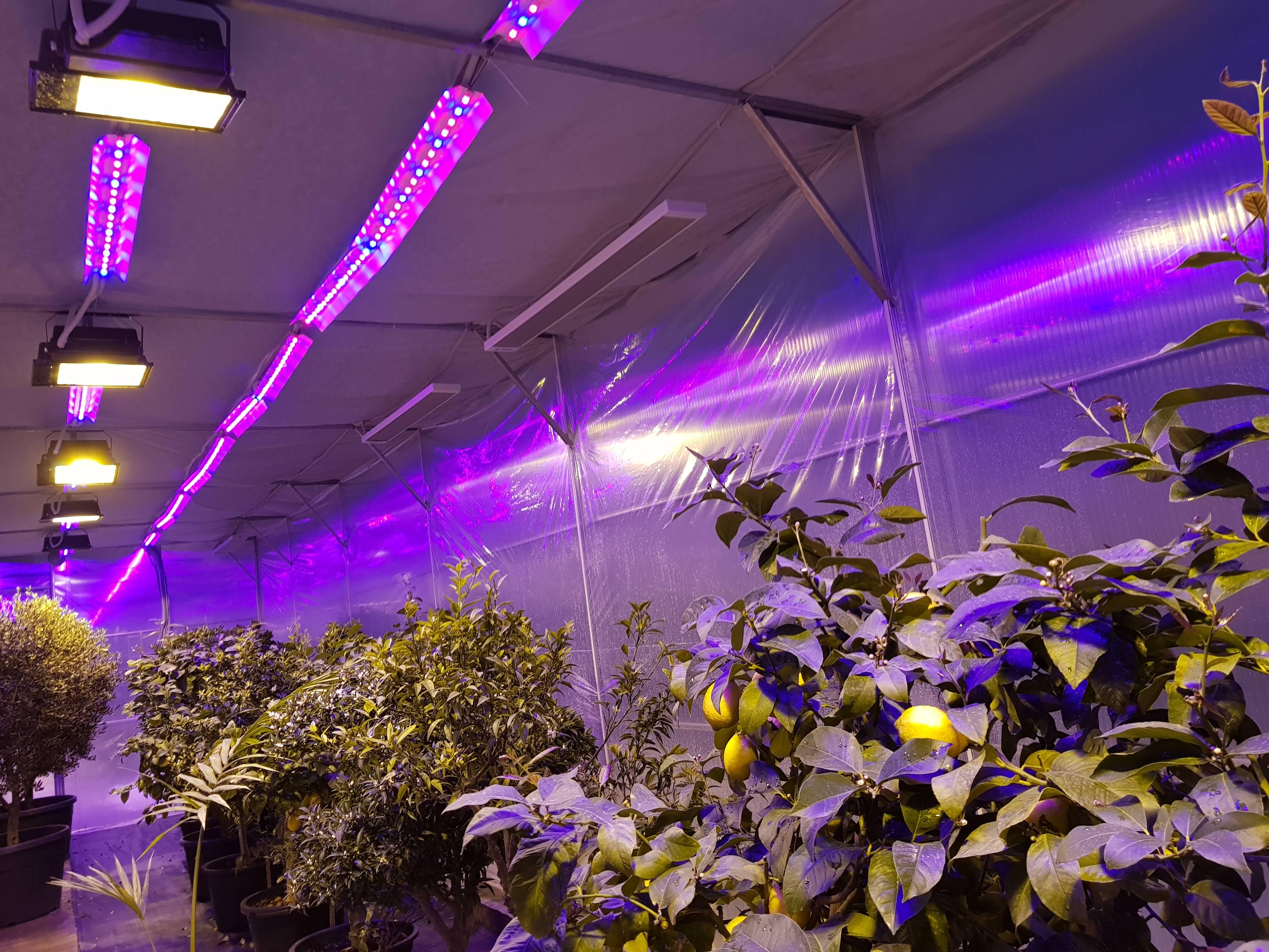 Освещение теплицы светодиодными лампами: расчет мощности лед светильников