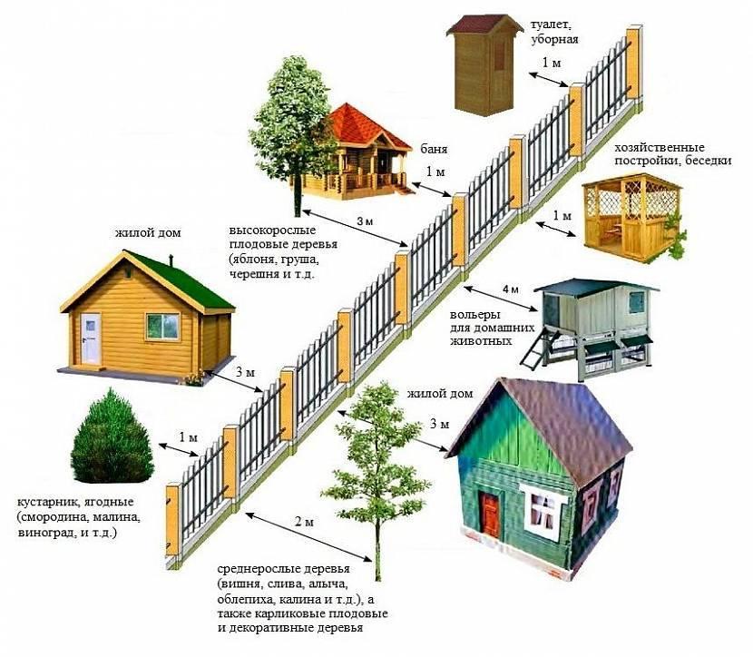Посадка деревьев и кустарников на участке нормативы - всё о воротах и заборе
