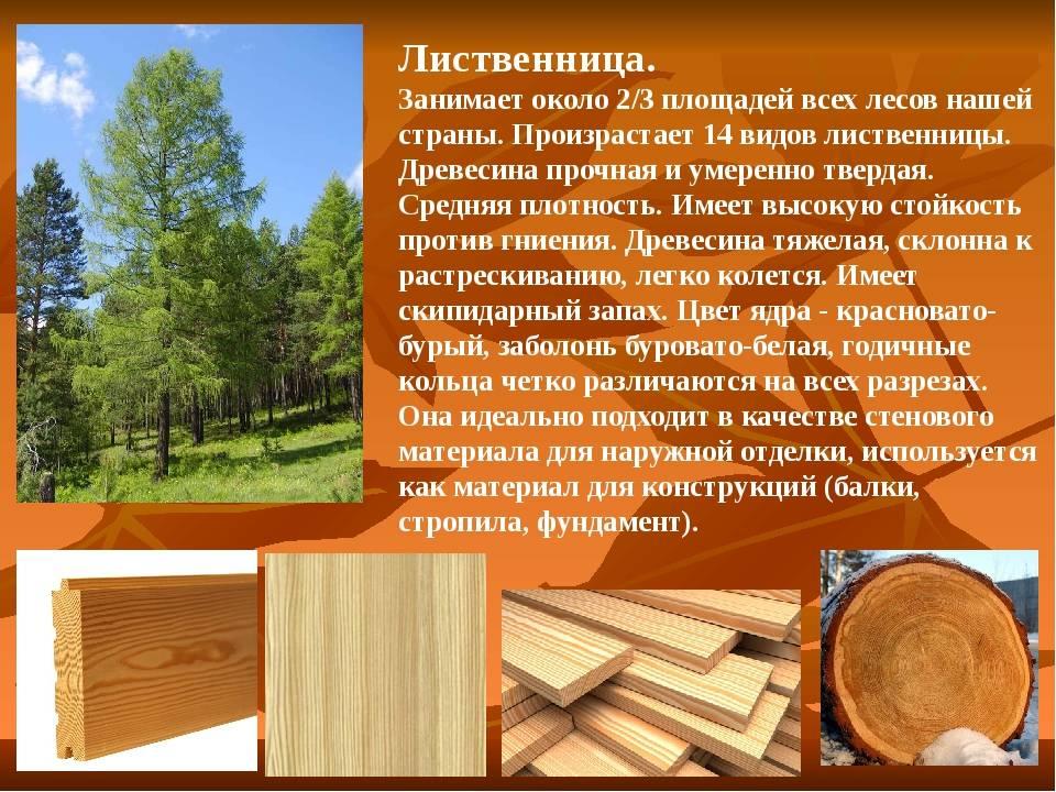 Породы древесины — классификация видов