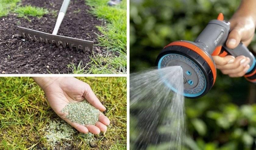 Правильный уход за газоном: подготовка почвы, посадка газонной травы, стрижка, полив и другое